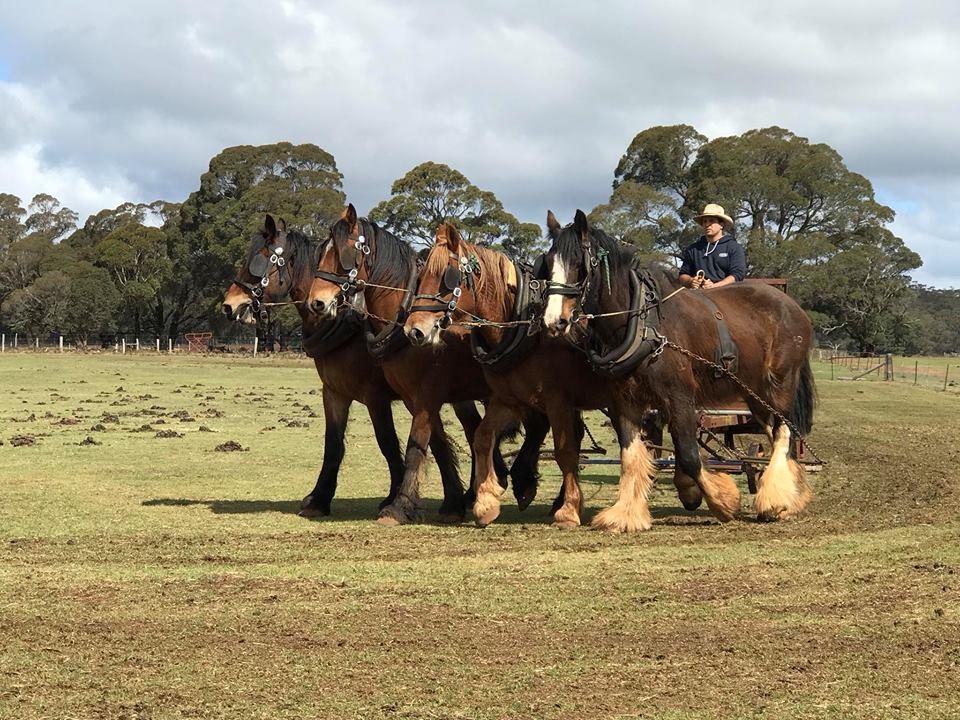 Equine Plumbing Specialists