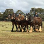 southern highlands horses